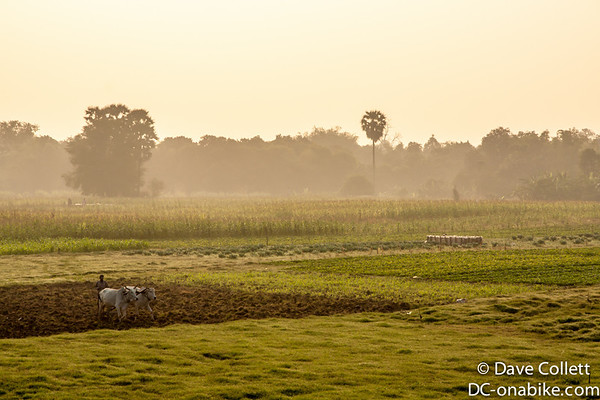 Farmland outside Kampong Cham